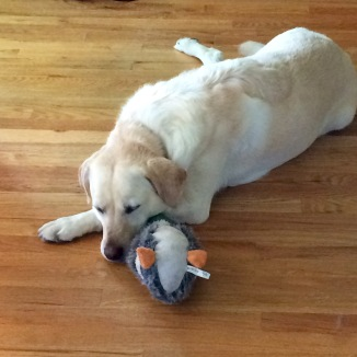 Here she is with her stuffed duck